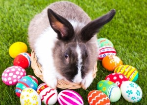 Easter idioms: bunny with eggs