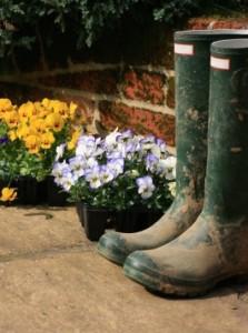 Gardening idioms