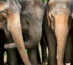 Memory of elephants: collective nouns for animals
