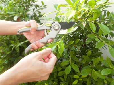 Pruning a bush: why copy-editing is like gardening
